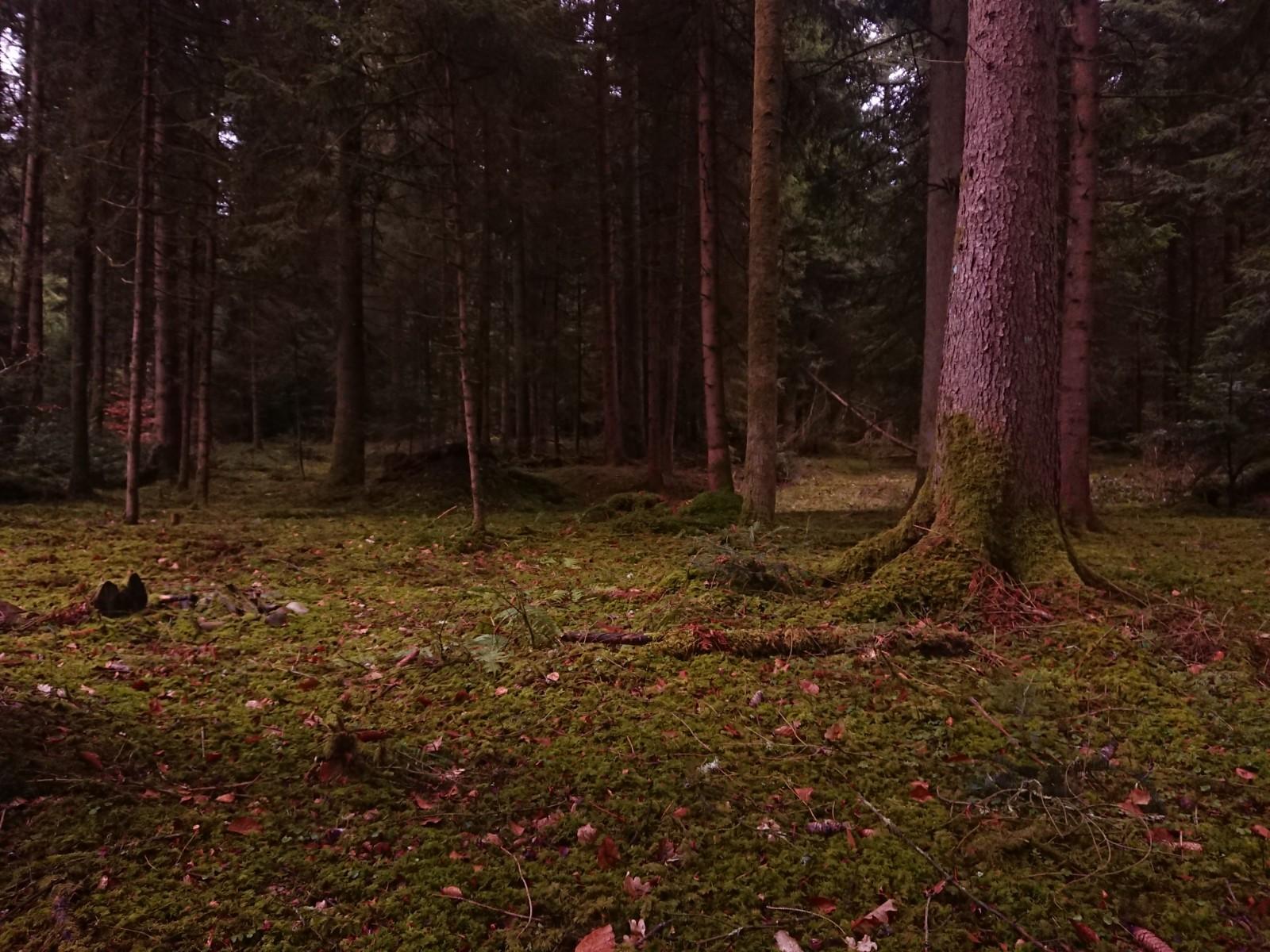 Fantastische OL Wälder direkt vor der Haustür