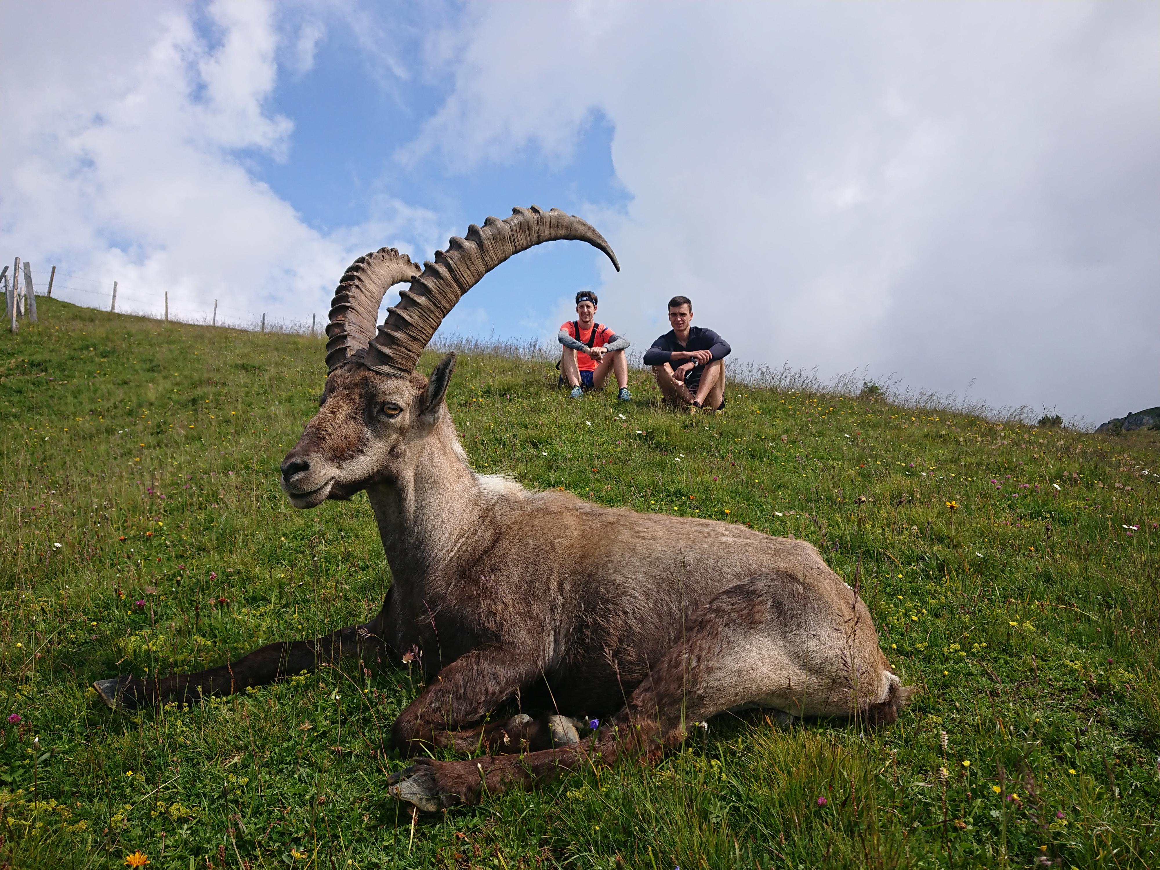 Auf dem Niederhorn mit tierischer Begleitung